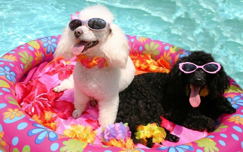 Dogs relaxing in a swimming pool