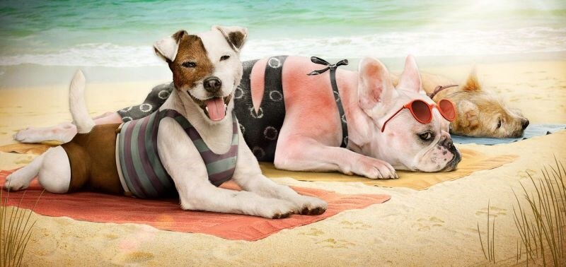 Sun-burnt dogs
