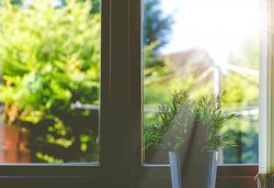 Window with view of garden